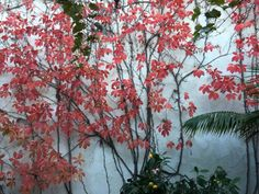 Even our outside walls are beautiful. The Virginia creeper has...