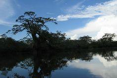 Amazon Rainforest Tours Ecuador, Tena Jungle Lodges, Jungle Trips Ecuador