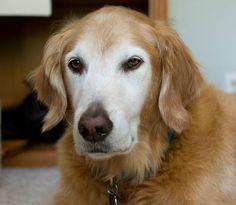 older & wiser -  Looks a little like Ginger