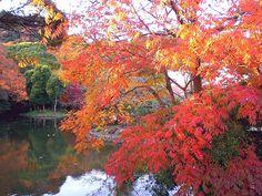 鶴岡八幡宮 Tsuruoka-hachiman. Every year I come here for my new year pray.