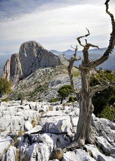Ginepro in sardegna - escursione trekking - SardiniaTouristGuide.it