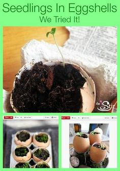 The Secret to Starting Seedlings in Adorable Eggshell Cups (VIDEO) | The Stir
