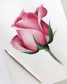 Since we've been the go-to site for watercolor techniques, watercolor painting ideas & watercolor tutorials. Learn how to paint! Realistic Flower Drawing, Simple Flower Drawing, Easy Flower Drawings, Beautiful Flower Drawings, Pencil Drawings Of Flowers, Pencil Art Drawings, Colorful Drawings, Drawing Art, Rose Drawings