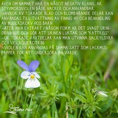 """Styvmorsviolen kallas även """"trefaldighetsblomma"""" och enligt legenden kommer namnet av att trefaldighetsblomman var den mest väldoftande av alla blommor men när hon såg hur människorna trampade ner säden för att plocka henne bad hon Gud att bli fråntagen doften. Hon slapp den, och fick istället sina färger: """"gyllene för Fadern, vitt för Sonen och violett för den Heliga Ande"""". #styvmorsviol #trefaldighetsblomma #alphaplus #näringförlivskraft #trixygram"""