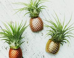 1 Pineapple Real/Living Air Plant magnet w/airplant,Pineapple decor, Air Plant Holder,Air Planter,Indoor Planter,Bridesmaid Gift