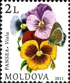 Moldova Postage Stamps (Definitive) 2011 № 754 | Viola | Issue: Flowers