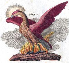 Mythology – Phoenix Friedrich Justin Bertuch, Bilderbuch für Kinder, 1790-1830 (Eigenbesitz), Fabelwesen. Phoenix