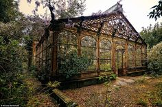 """Compendium of Abandoned Greenhouses """"The Steampunk Greenhouse"""" dating back to the last quarter of the Century. Photograph by Nicola Berlotti""""The Steampunk Greenhouse"""" dating back to the last quarter of the Century. Photograph by Nicola Berlotti Abandoned Mansions, Abandoned Buildings, Abandoned Places, Victorian Greenhouses, Victorian Conservatory, Victorian Gardens, Dream Garden, Old Houses, Beautiful Places"""
