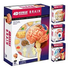 assembled puzzle model Brain structure Anatomical of skull brain Medical Science model Human Brain Anatomy, Human Anatomy Model, Anatomy Models, Science Toys, Easy Science, Medical Science, Stem Science, Skull Anatomy, Skeleton Anatomy