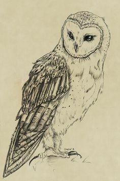 owl in flight drawing - Google Search
