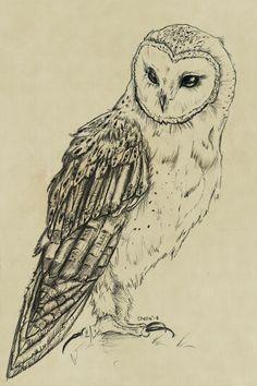 owl in flight drawing - Google Search