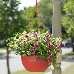 Self-Watering Hanging Baskets