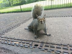 Hyde Park in London, Greater London - a good place to see squirrels