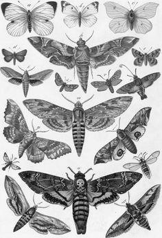 mariposas <3