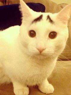 Sam le chat aux sourcils
