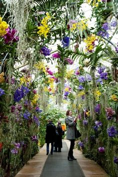 Kew Gardens, London, Tropical Festival