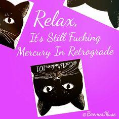Relax, it's still #mercuryretrograde #blackcats @catwisdom101