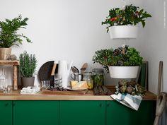 Om man låter växthuset och köket hämta inspiration av varandra så får man ett härligt grönskande kök, klorofyllt av ätbara nyttigheter och rena naturmaterial. Här kan man odla både sitt växt- och matintresse i rofylld harmoni.