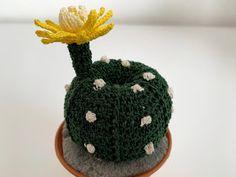 Small Cactus, Cactus Plants, Half Double Crochet, Single Crochet, Crochet Cactus, Sea Urchin, Slip Stitch, Flower Petals, Planting Succulents
