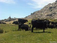 La Trashumancia en el Puerto del Pico el 23 de junio de 2012. Foto Rosa Cabezas.
