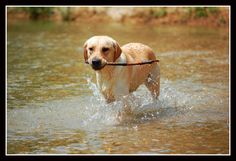 All Fast, Fun and Effective DOG Stuff.  Don't wait GO HERE : www.dodoggreat.com  #dodoggreat
