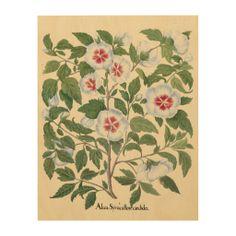 Vintage Hibiscus Flowers by Basilius Besler Wood Print