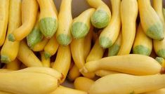 How to Grow, Harvest, Store, and Prepare Squash Blossoms - Gardening Channel Squash Vegetable, Squash Food, Frozen Summer, Heart Healthy Recipes, Healthy Foods, Healthy Eating, Summer Squash, Vintage Recipes
