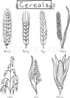 Drawings of grains