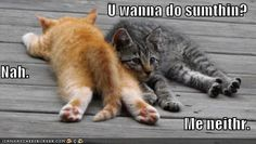 cute captions 15 Funny Animals Are Even Funnier With These Captions Pics) Sounds like me when I have a babysitter lol Cute Funny Animals, Funny Animal Pictures, Funny Cute, Cute Cats, Hilarious, Humor Animal, Animal Quotes, Animal Memes, I Love Cats