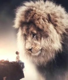 Lion of the Tribe of Judah Lion Pictures, Jesus Pictures, Surreal Photos, Surreal Art, Photographs, Beautiful Creatures, Animals Beautiful, Giant Animals, Lion Love