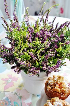 heather, wrzos, flowers