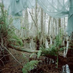 Rebecca Reeve - Marjory's World, 2012