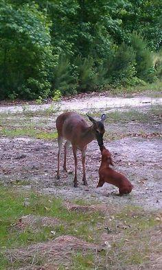Deer and dachshund.....AWWWW!!!!!