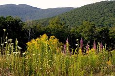 Best Yoga Retreats:  Stowe Mountain Ranch Retreat (Vermont)