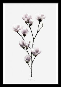 Magnolia, poster i gruppen Posters och prints hos Desenio AB (7911)