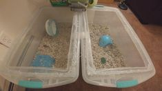 HOUSE UPGRADE: Connected 2 large storage bins with a diameter pvc pipe and filled the right bin with tons of bedding for tunneling. (Hamstef is in the left bin sleeping. Hamster Ideas, Hamster Stuff, Fluffy Animals, Cute Animals, Large Storage Bins, Sulcata Tortoise, Cute Hamsters, Pet Cage, Home Upgrades