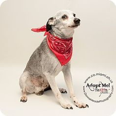 VERY URGENT!  I am at a kill shelter in Troy, OH - Terrier (Unknown Type, Medium) Mix. Meet Clarence, a dog for adoption. http://www.adoptapet.com/pet/12600173-troy-ohio-terrier-unknown-type-medium-mix