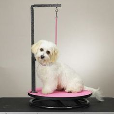 Dog grooming tables and straps do it yourself pet grooming all master equipment small pet grooming table pink solutioingenieria Choice Image