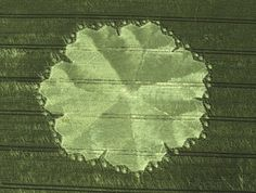 Once again, in Wiltshire England, in East Field, this one appeared in 1998. It is one of the largest ever spotted and holds the record for the largest area of bent over crop within its boundaries - 1.6 acres!
