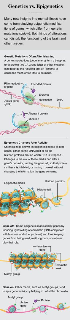 """Genetics vs. Epigenetics Illustration by Emily Cooper. Originally produced for """"A New Kind of Inheritance,"""" By Michael Skinner, in Scientific American, August, 2014."""