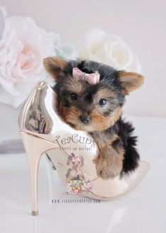 Gorgeous Yorkie puppy by TeaCupsPuppies.com #yorkie #yorkshireterrier #puppy #puppies #teacuppuppy #teacuppuppies #puppyboutique #teacuppuppyboutique