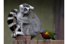 Lemur Bird and a parrot (Hamburg)