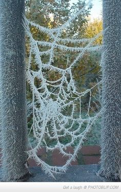I HATE HATE anything to do with spiders but this is simply amazing. beautiful!