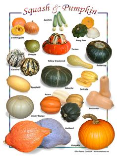 Hard Squash and Pumpkin Fruit And Veg, Fruits And Veggies, Vegetables, Pumpkin Varieties, Varieties Of Squash, Winter Melon, Pumpkin Squash, Zoodle Recipes, Food Charts