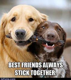 Stick Together @ isCute.com