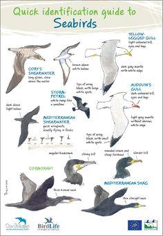 Identification of Marine birds (seabirds)