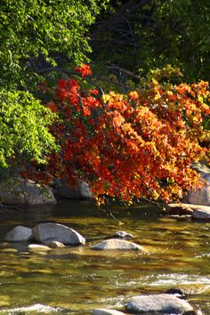 Some early fall foliage on the banks of the Pemi.