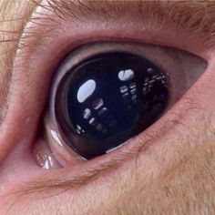120 billions of eyes are ripped out of animal skulls every single year. This poor pig sees the sky for the very first time in her life through the slots of the death truck. She will see no mercy from the human being. Only knife. Why?