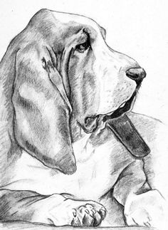 basset hound wallpaper | Basset Hound - basset-hounds Fan Art