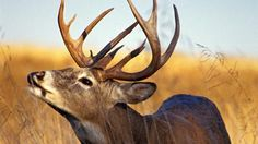 15 Deer Hunting Myths Even Experienced Hunters Believe Preview Image